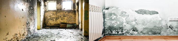 mold removal services in Long Island